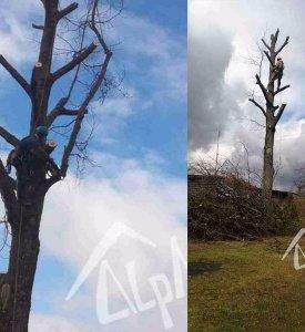 Удаление дерева на дачном участке