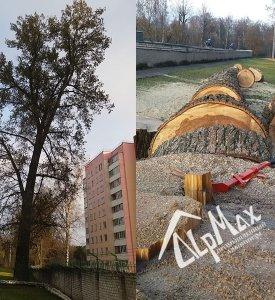 Удаление тополя на территории МВД в Могилёве