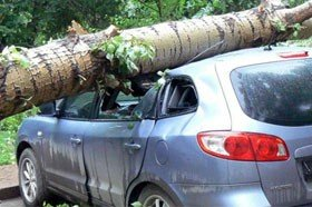 Как узнать, что дерево «аварийное» и его необходимо удалить