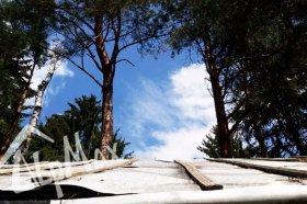 Спилим аварийное дерево, безопасно и недорого!