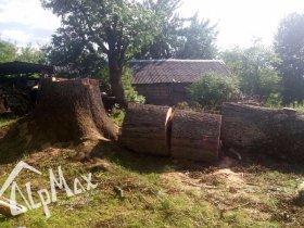 Удаление дереава (вяз) в Минской области