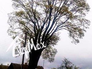 Удаление дерева — Большой клён в д. Дятлово