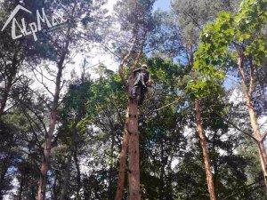 Удаление дерева на кладбище, г.Заславль