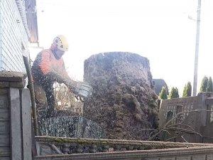 Удаление дерева в 10 км от Минска