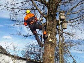 Удаление дуба в деревне Дятлово, Минская область