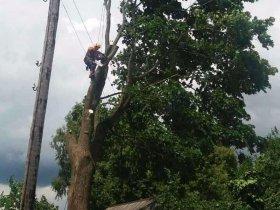 Удаление дерева в деревне Слобода